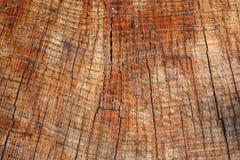 взгляд вала тимберса кец Стоковые Фотографии RF