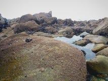 Взгляд вдоль тварей утесов, водорослей, моря, камешка и моря стоковое фото