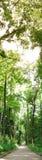 взгляд вертикали пущи Стоковое Изображение