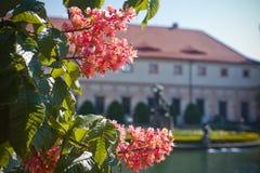 Взгляд весны к городу Праги стоковая фотография