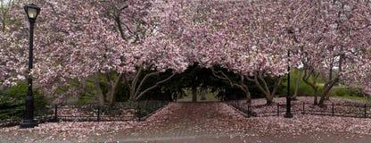взгляд весны парка Стоковые Фото
