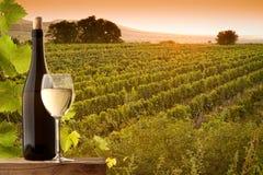 Взгляд вечера виноградников Стоковые Изображения
