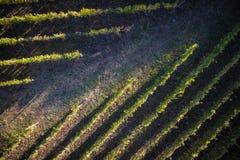 Взгляд виноградника стоковые изображения rf