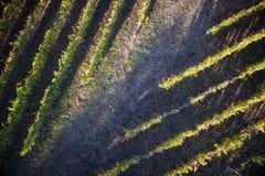 Взгляд виноградника стоковые фотографии rf