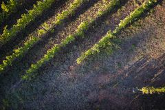 Взгляд виноградника стоковое фото