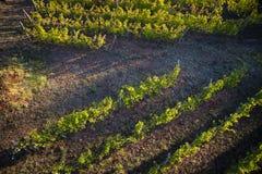 Взгляд виноградника стоковые изображения