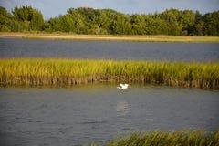Взгляд водного пути с летанием птицы стоковая фотография