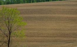 Взгляд вспаханного поля стоковая фотография rf