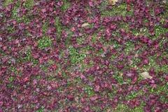 Взгляд высокого угла листьев осени сухих стоковые изображения rf