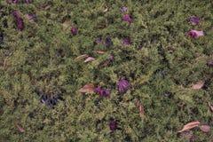 Взгляд высокого угла листьев осени сухих стоковое изображение