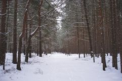 Взгляд в лес зимы стоковые изображения rf