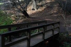 Взгляд в парке стоковое изображение rf