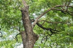 Взгляд гигантского дерева в лесе Стоковые Изображения
