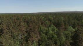 Взгляд глаза птицы съемки красивого зеленого леса воздушной r Камера летает вперед над лесом акции видеоматериалы