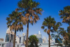 Взгляд горизонта Сиднея CBD как увидено от гавани милочки Стоковое Изображение RF