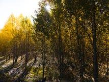 Взгляд гористой местности, Тибета, Китая стоковые фото