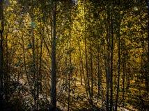 Взгляд гористой местности, Тибета, Китая стоковая фотография rf