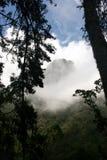 Взгляд горного пика с завальцовкой тумана внутри стоковое изображение rf