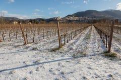 Взгляд городка Умбрии Assisi в зиме, при поле виноградника покрытое снегом и голубым небом с белыми облаками Стоковое фото RF