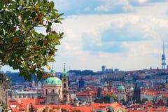 Взгляд городского пейзажа Праги через ветви с ягодами Плотность ` s города городская зданий, церков и башен стоковые изображения