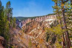 Взгляд гранд-каньона Йеллоустон от следа пункта художника Национальный парк Йеллоустона Вайоминг США стоковые изображения