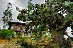 Взгляд деревни Бутана стоковое изображение rf
