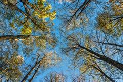 Взгляд деревьев ниже стоковое фото
