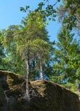 Взгляд деревьев растя на утесах Стоковые Изображения