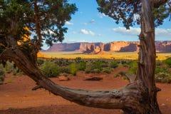 Взгляд долины памятника и дерево Стоковые Изображения