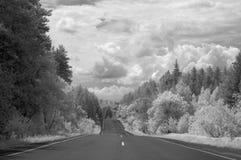 Взгляд дороги асфальта спускает между лесами стоковое фото