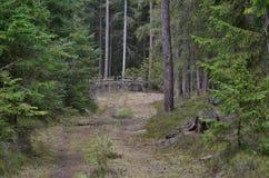 Взгляд дороги леса, южной Богемии Стоковая Фотография
