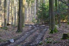 Взгляд дороги леса, южной Богемии Стоковое фото RF