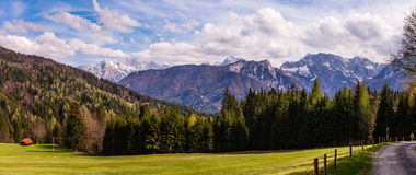 Взгляд елевой пущи и высокого лужка Стоковая Фотография