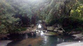 Взгляд естественно пруда в лесе Стоковое фото RF