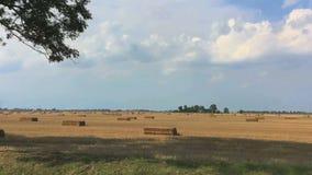 Взгляд желтых полей стерни с прямоугольными стогами сена от moving окна автомобиля сток-видео