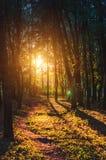Взгляд захода солнца леса лета сценарный с солнцем среди деревьев Стоковые Изображения
