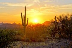 Взгляд захода солнца пустыни Аризоны с кактусами Стоковое Изображение
