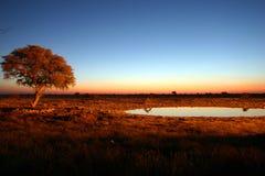 взгляд захода солнца Стоковые Изображения RF