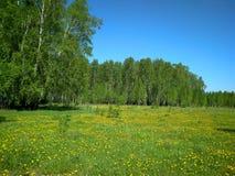 Взгляд зеленой жары травы солнца лета луга леса луга суккулентной зеленой изумрудной сценарный богатой растительности ясной свеже стоковая фотография rf