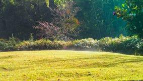 Взгляд зеленой лужайки с теплым солнечным светом утра Стоковое Изображение RF