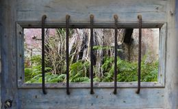 Взгляд зеленых папоротников и сухих ветвей через бары сухого w Стоковые Фотографии RF