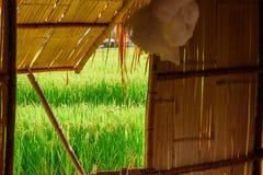 Взгляд зеленых рисовых полей от окна шляпы на провинции Nan, Стоковое фото RF