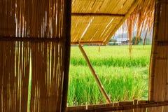Взгляд зеленых рисовых полей от окна шляпы на провинции Nan, Стоковые Изображения