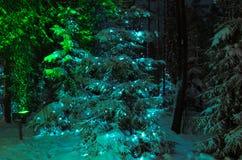 Взгляд зимы: спрус в лесе ночи украшенном с гирляндой рождества стоковая фотография