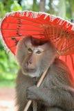 Взгляд зонтика владением обезьяны красный на камере Стоковое Фото