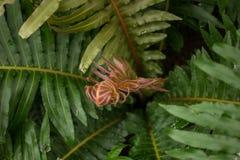 Взгляд зрелых Tasmanian папоротников Стоковое Изображение