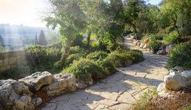 Взгляд Иерусалима от Mount of Olives Стоковые Фото