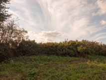 Взгляд изгороди с белыми облаками выше в небе Стоковые Изображения RF