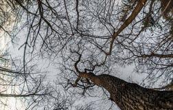 Взгляд искусства, абстрактных и художнических fisheye Ветвь леса и дерева Стоковая Фотография