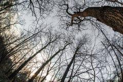 Взгляд искусства, абстрактных и художнических fisheye Ветвь леса и дерева Стоковые Изображения RF
